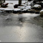 pond care new jersey NJ