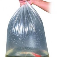 acclimating your fish