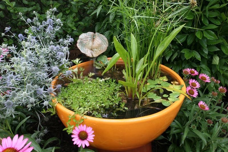 Patio Container Water Garden Pond New Jersey ...