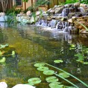 Pond Water Garden Services Install in Hillsborough NJ