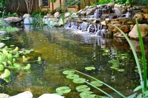 Pond Water Garden Services Install in Hillsborough NJ
