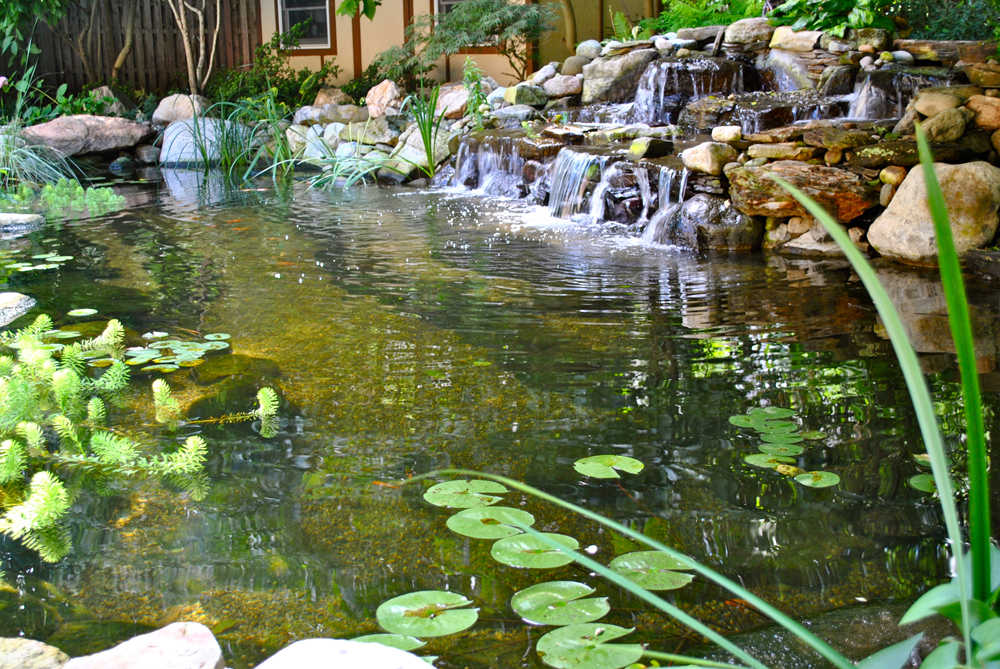 Backyard koi ponds water garden installation in for Tiered pond waterfall