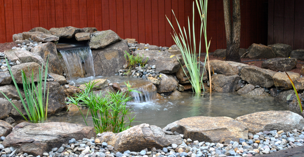 Backyard koi ponds water garden installation in for Outdoor fish pond supplies