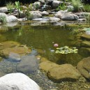 Koi Pond Water Garden Installation Short Hills NJ Union County
