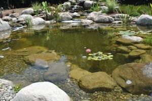 Koi Pond Water Garden Installation Short Hills NJ Union County