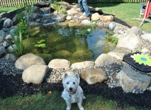 New Jersey Pond Services & Water Garden Services | Full Service ...