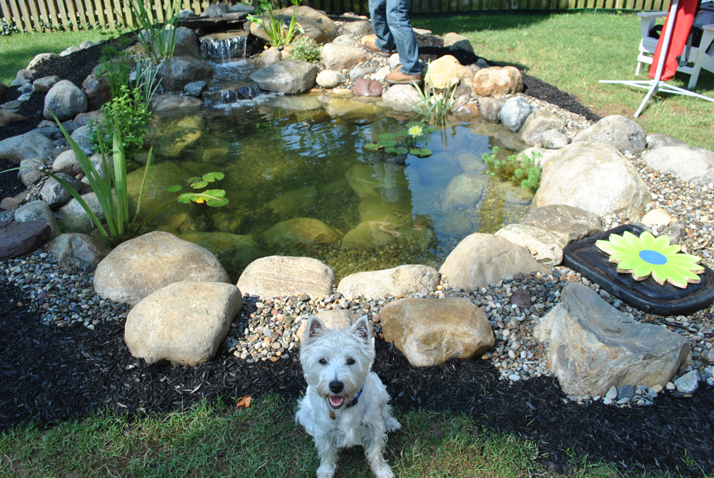 New Jersey Pond Services & Water Garden Services | Full Service Aquatics