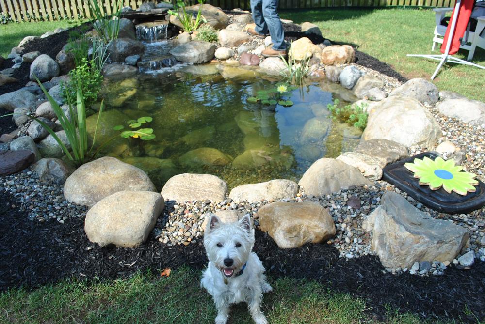 New Jersey Pond Services & Water Garden Services | Full Service Aquatics
