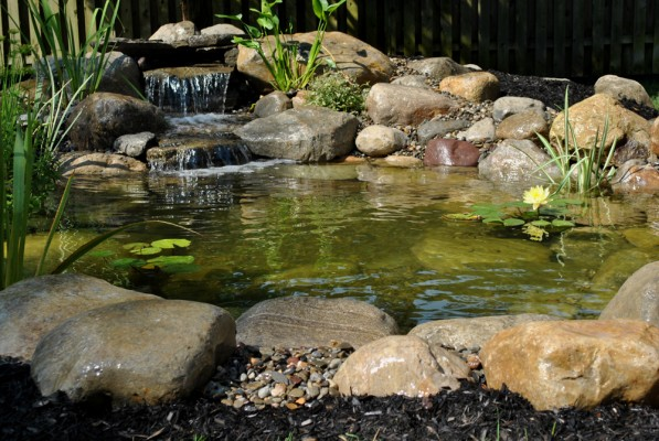 Water garden koi pond installation project in madison new for Garden pond installers