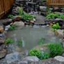 backyard pond water garden koi Verona NJ Essex County NJ 07044