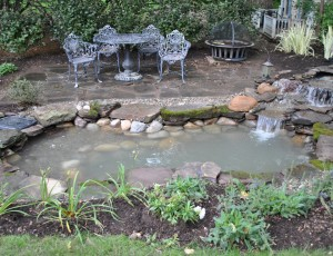 As A New Jersey Pond Guy I Am Always Looking For Ways To Encourage My Customers Enjoy Their Ponds And Water Gardens Or Extend The Enjoyment Of