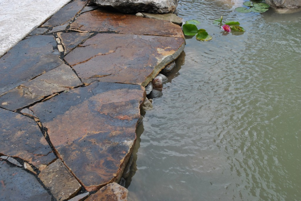 koi pond water garden Whitehouse Station, NJ 08889 Hunterdon County