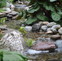 water garden pond installation renovation Chatham NJ 07928 Morris County