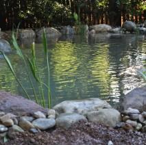 Water Garden Koi Pond Hillsborough NJ 08844