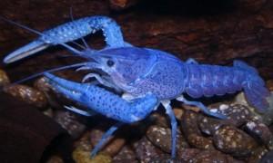 new jersey crayfish pond