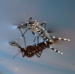 Mosquito control does not have to be a problem in water gardens.