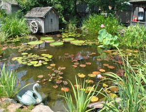 How to winterize pond plants and have them thrive next season for Koi pond plants