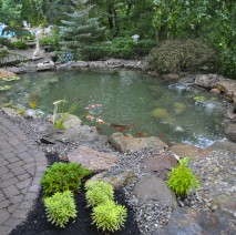 koi pond Warren NJ