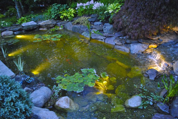 water garden Ringoes NJ