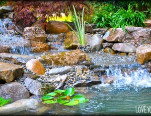 How to choose a pond and water feature contractor. What do you ask?