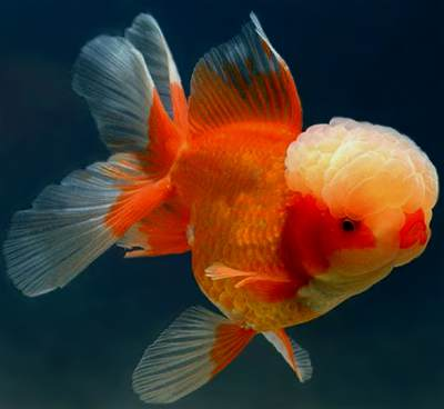 Japanese Koi & Garden Pond Fish Guide in New Jersey Full Service ...