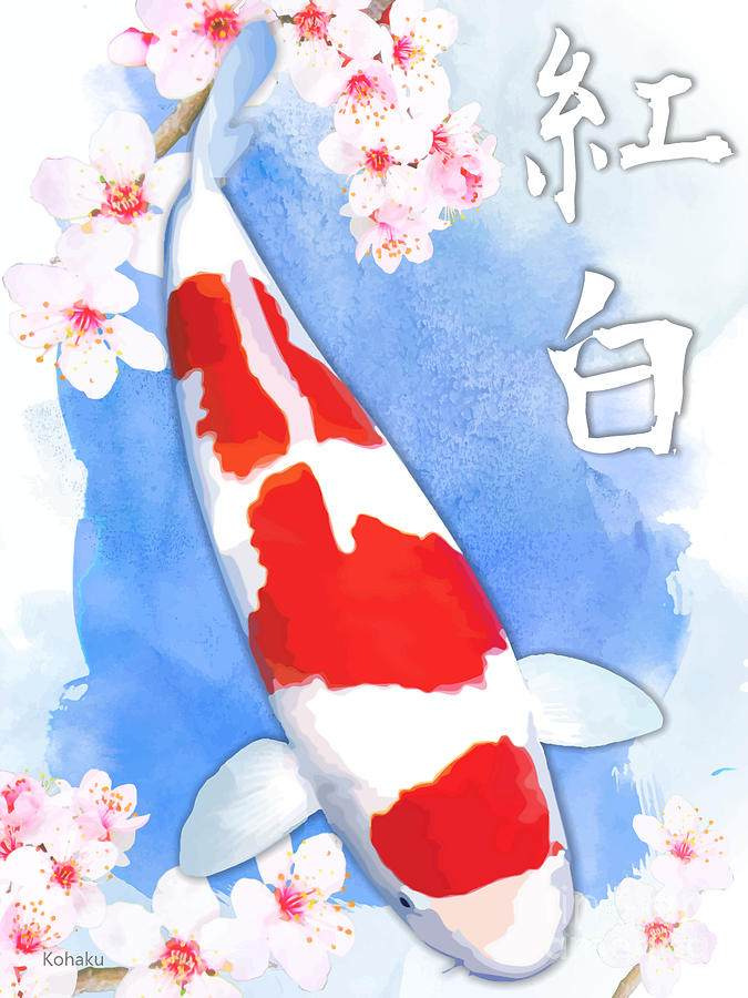 THE KOHAKU JAPANESE KOI FISH