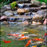 Koi Fish Pond Installation Company