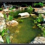 New Jersey Koi Pond Installation
