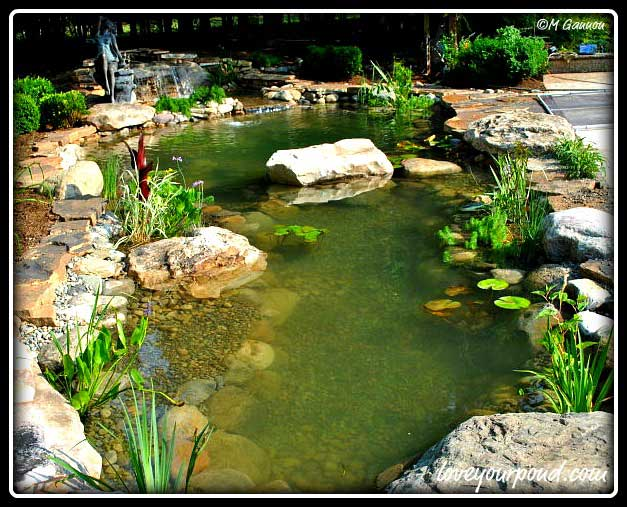 Nj pond construction installation full service aquatics for Fish pond installers