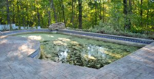 swimming pool koi pond