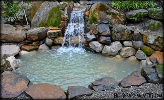 koi pond water garden Princeton New Jersey
